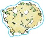quinoi